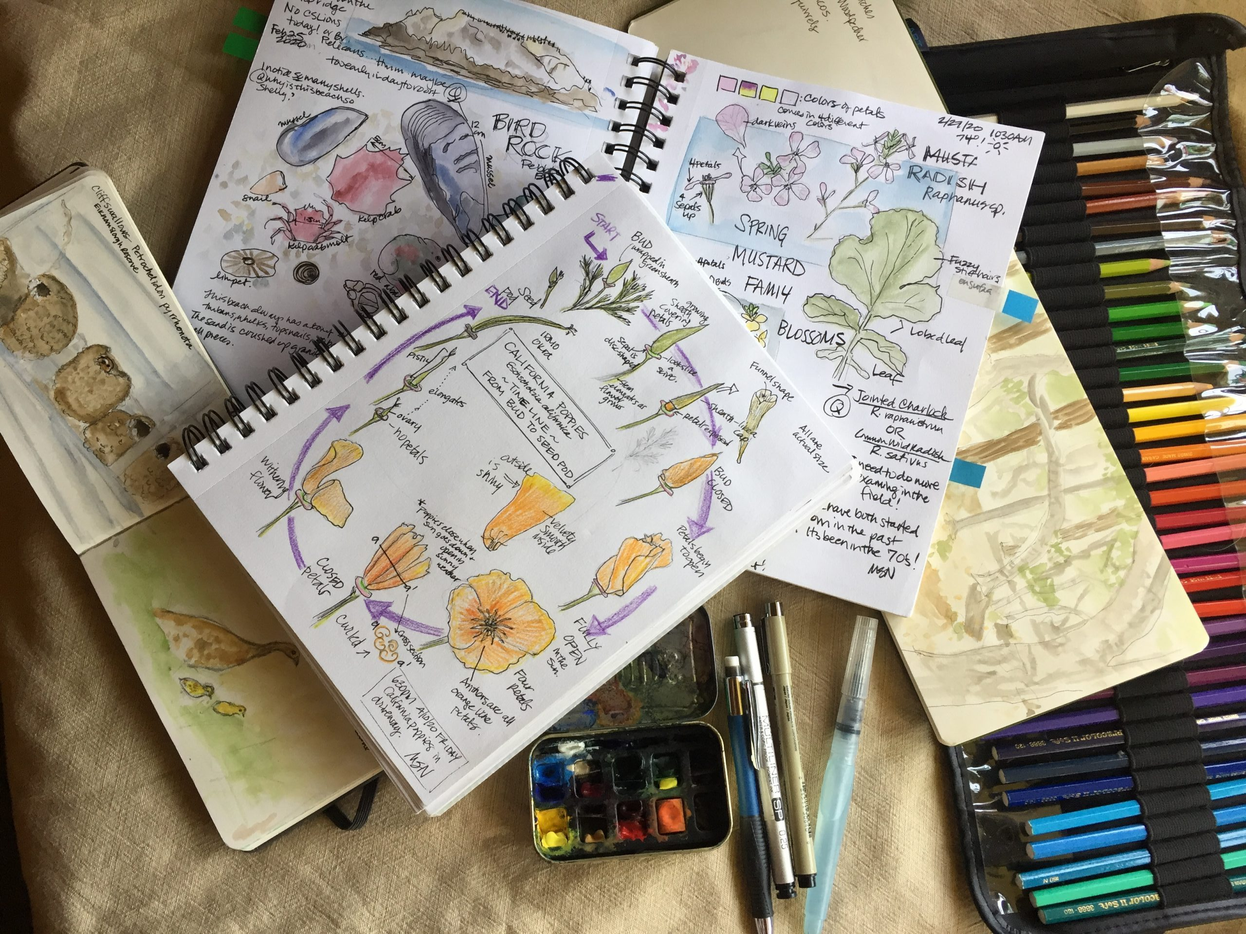 Spark your Curiosity: Intro to Nature Journaling (6 of 6)