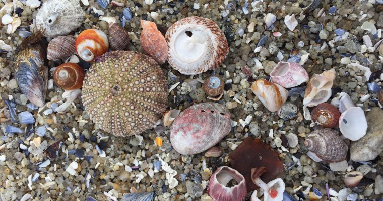 Virtual Tidepool Nature Journaling (video)
