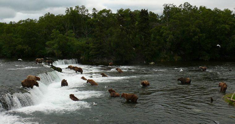 July 12 Brown Bears: MB Nature Journal Club (video)