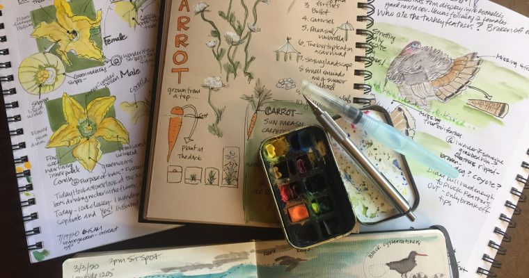 Intro to Nature Journaling: Level 2- Fall 2020