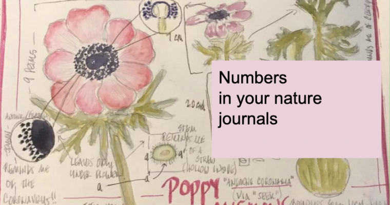 Numbers in Nature Journaling