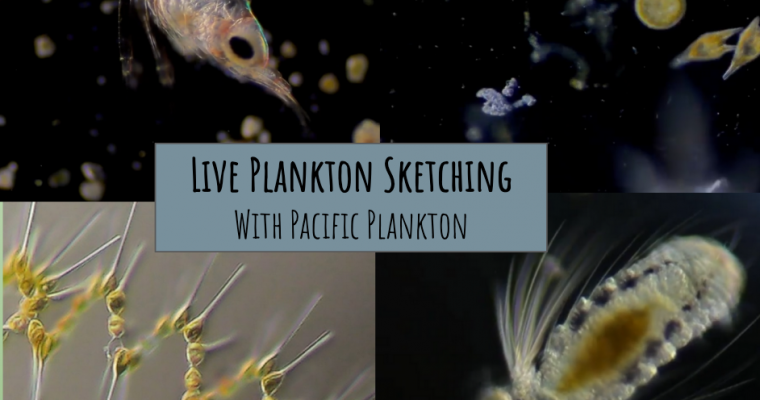 Micro safari: live plankton sketching with Pacific Plankton (Video)
