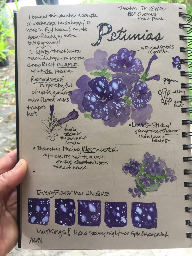 Galaxies in petunias