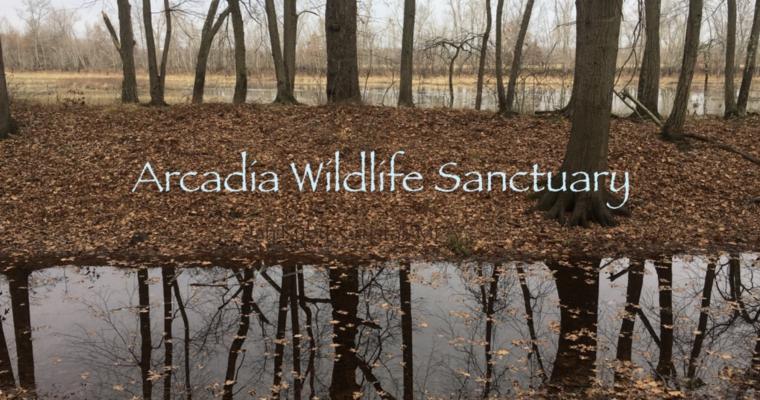 Nature Journaling at Arcadia Wildlife Sanctuary (Video)