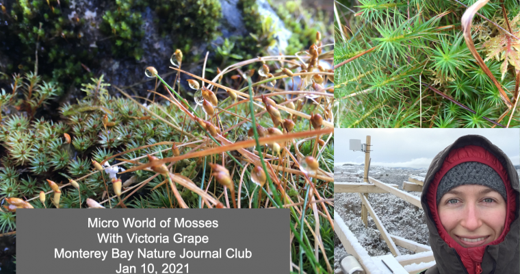 Micro world of Mosses (video)
