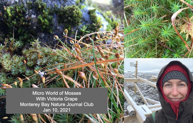 Micro world of Mosses