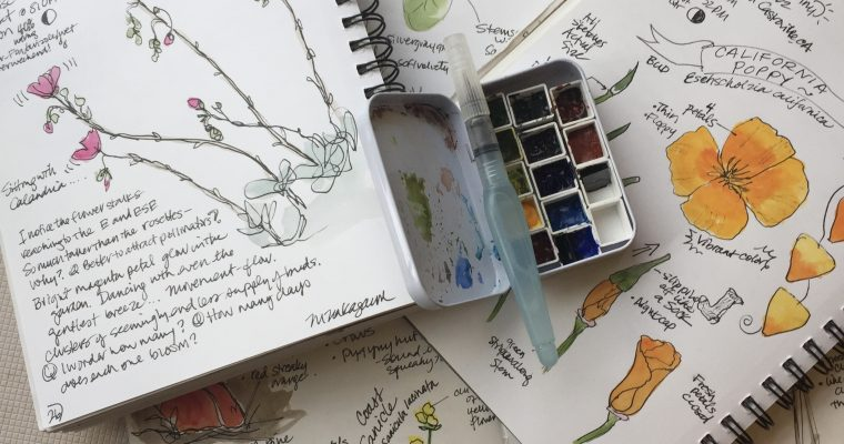 Boost your Naturalist Skills with Nature Journaling—California Wildlife day (video)