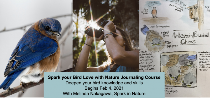 Spark your Bird Love with Nature Journaling (4 of 6)