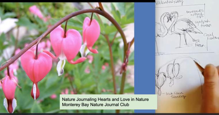 Valentine Love in Nature