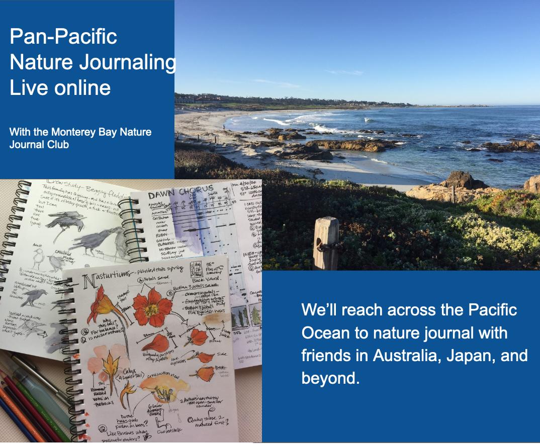 Pan-Pacific Nature Journaling (videos)