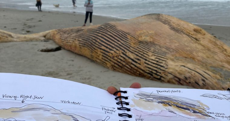 A whale of a wonder: impromptu nature journaling